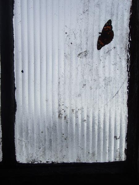 Бабочка на моем окне.